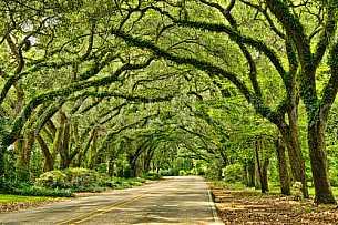 Main Street - Oak Street - Magnolia Springs, AL