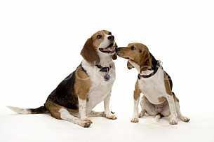 Puppy Love