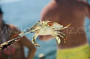 Crab fishing in Mobile Bay