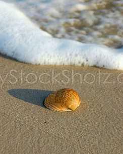 Solitary sea shell