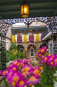 Bellingrath Gardens Mums