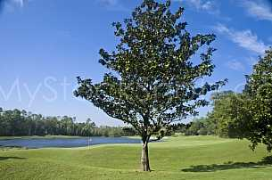 Golf - Magnolia Grove - Robert Trent Jones Golf Trail