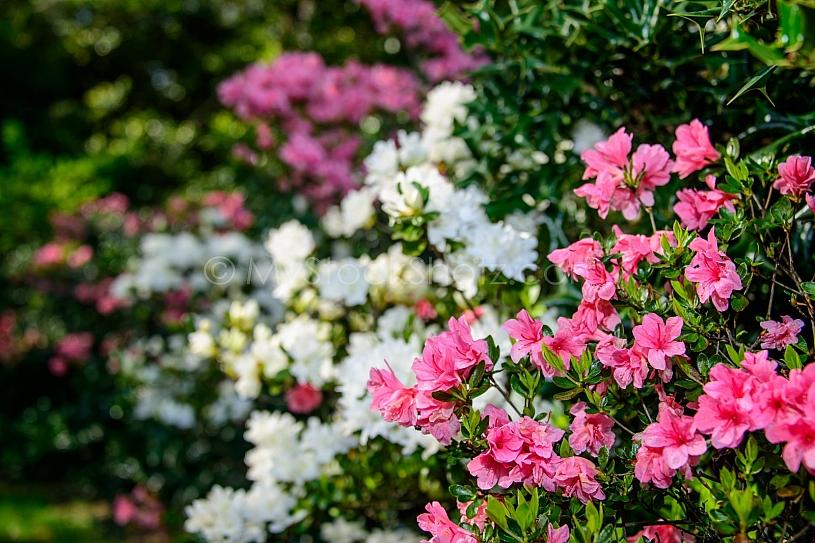 Beautiful Bellingrath Gardens