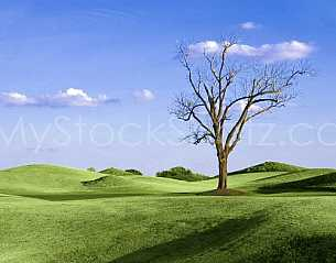 Lone tree on the golf course 2