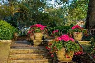 Bellingrath Gardens - Spring Morning