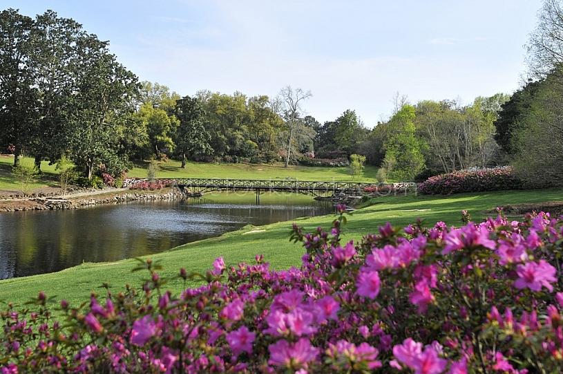 Azaleas in Bloom at Bellingrath Gardens