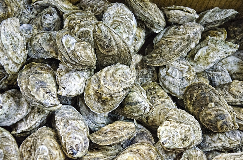 Oysters harvested - Mobile Bay