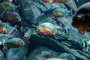 Sea Life - View into an Aquarium