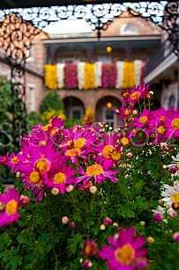 Bellingrath Gardens & Home - Mums in Bloom