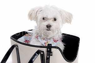 Puppy in a bag