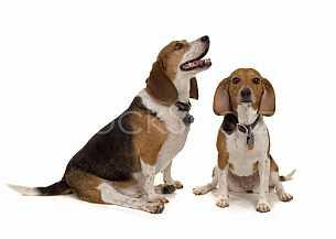 pair of pups