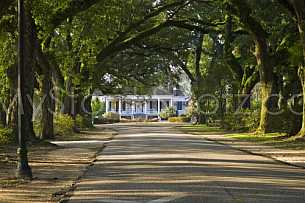 Avenue of Oaks at Spring Hill College