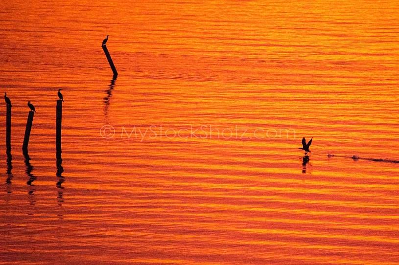 Mobile Bay Sunset - Montrose Alabama