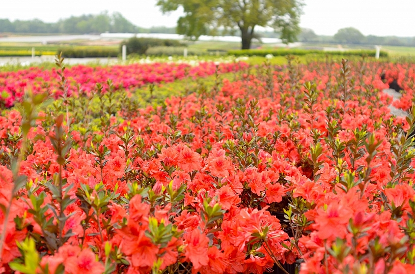 Nursery Industry in Mobile County, Alabama